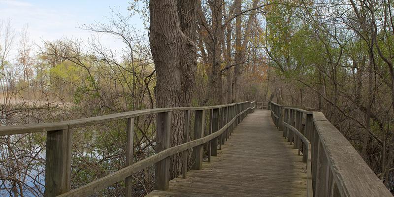 Magee Marsh State Park, Ohio